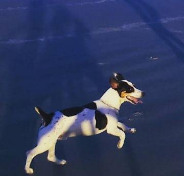 Conocé a Dudu, el perro ultramaratonista