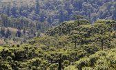 Divulgação/Parque Estadual de Campos do Jordão