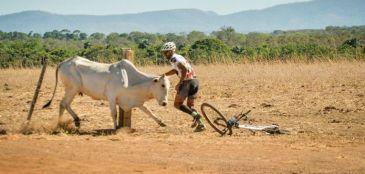 Vaca ataca ciclista no Tocantins